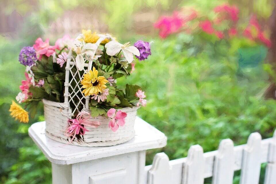 fleurs sur cloture