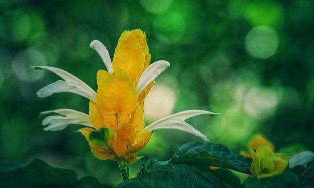 Quelles fleurs planter en septembre dans un jardin d'extérieur ?