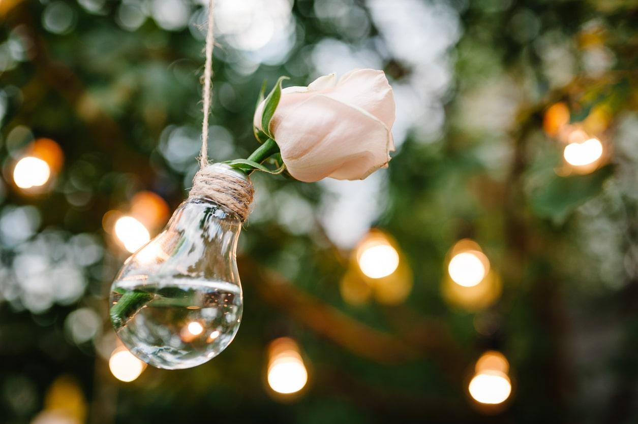 une tige de rose dans une lampe