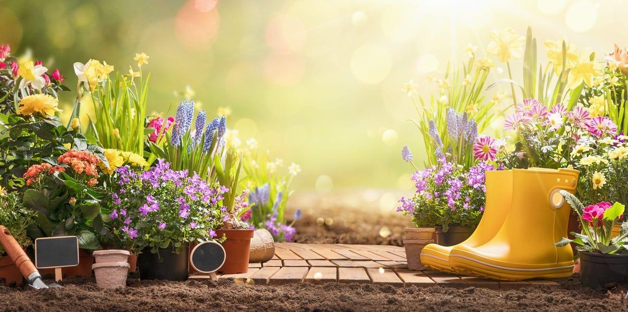 Créer un jardin insolite : le guide ultime
