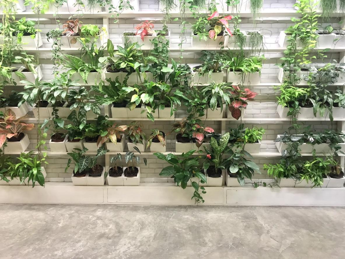 mur végétal ou jardin original