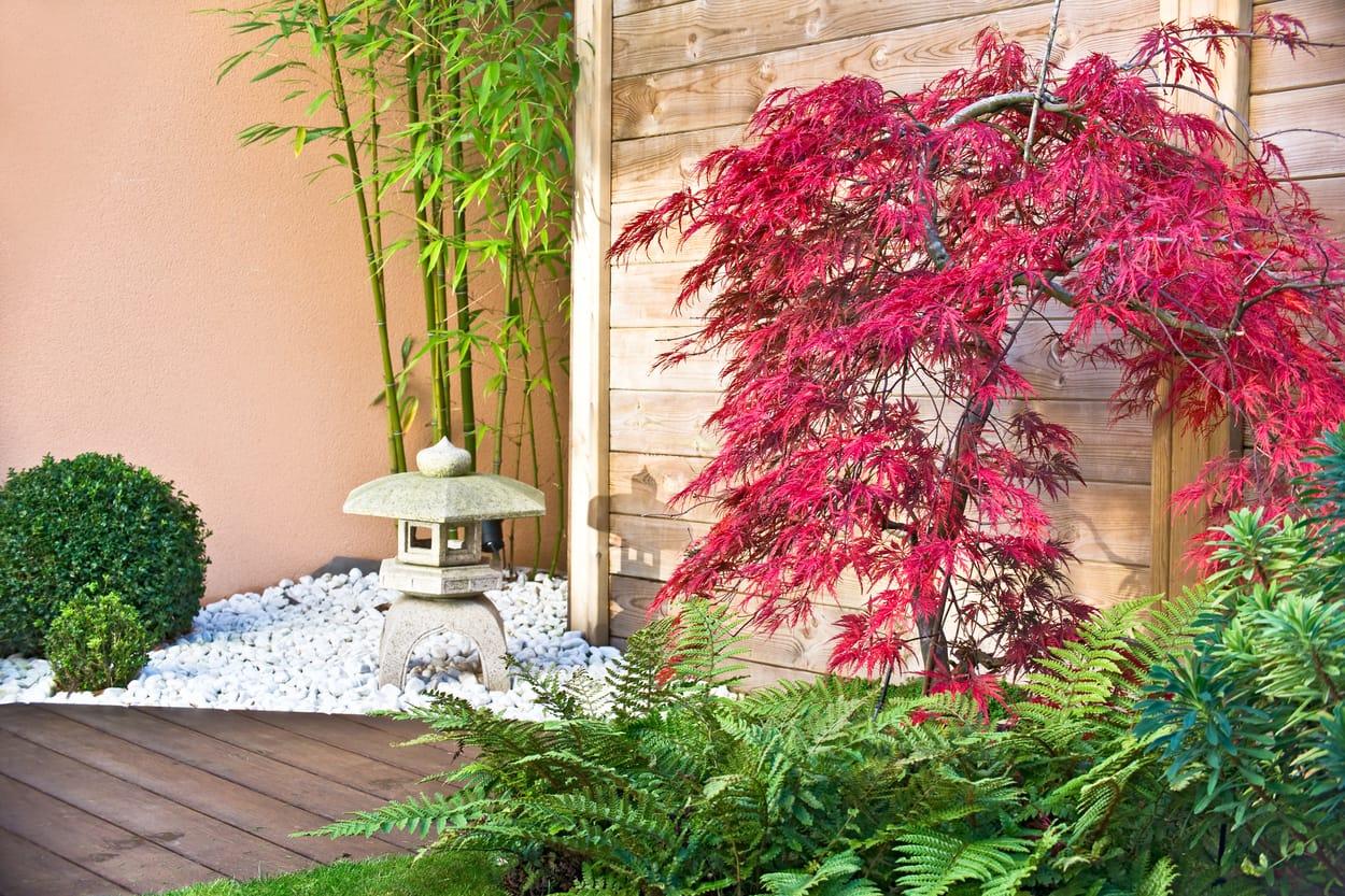 jardin zen - bambous et cerisiers