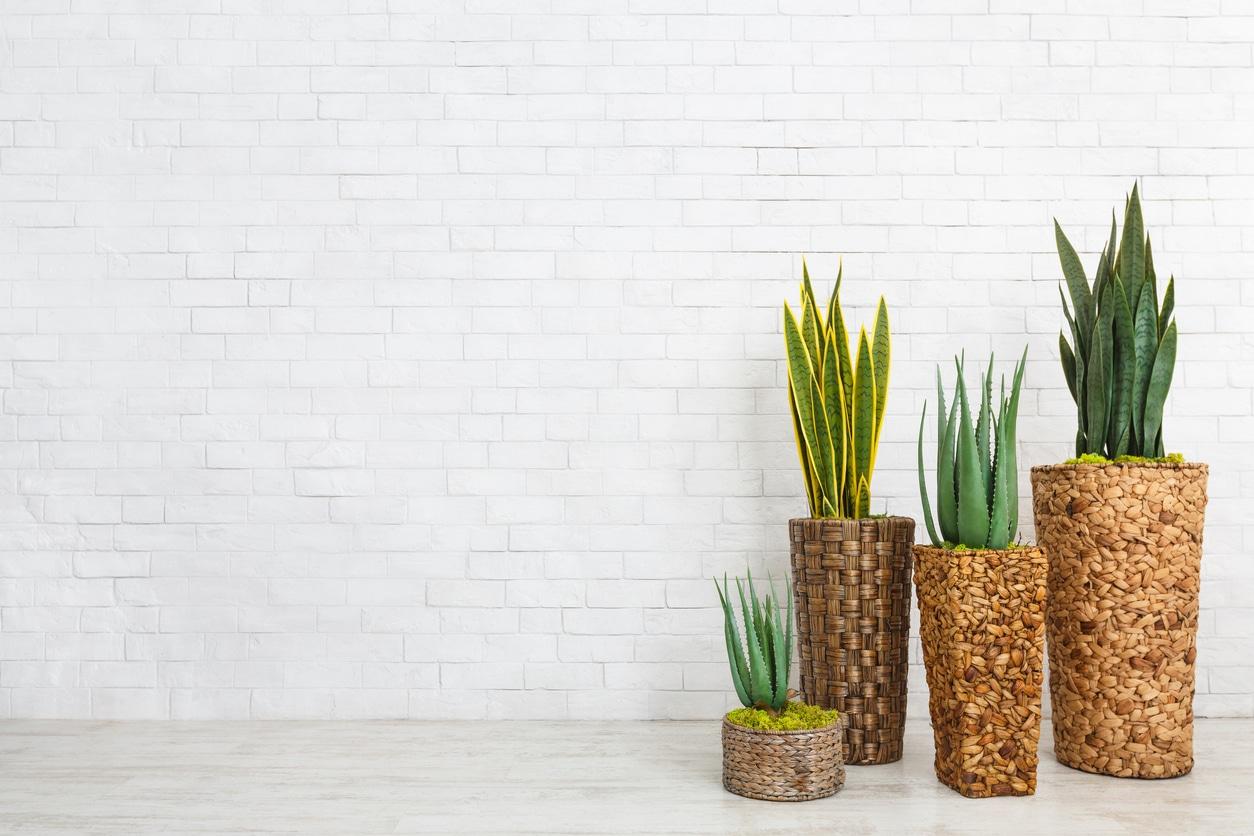 Plantes d'intérieur - salon africain