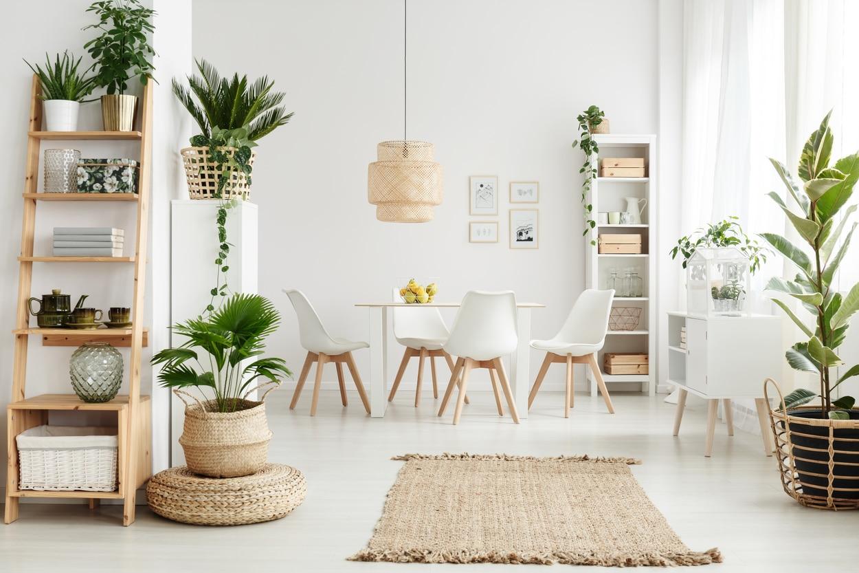 Décoration avec plantes et étagères en bois