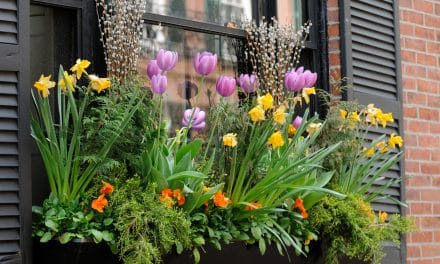 Quelles fleurs d'été pour une jardinière en plein soleil?