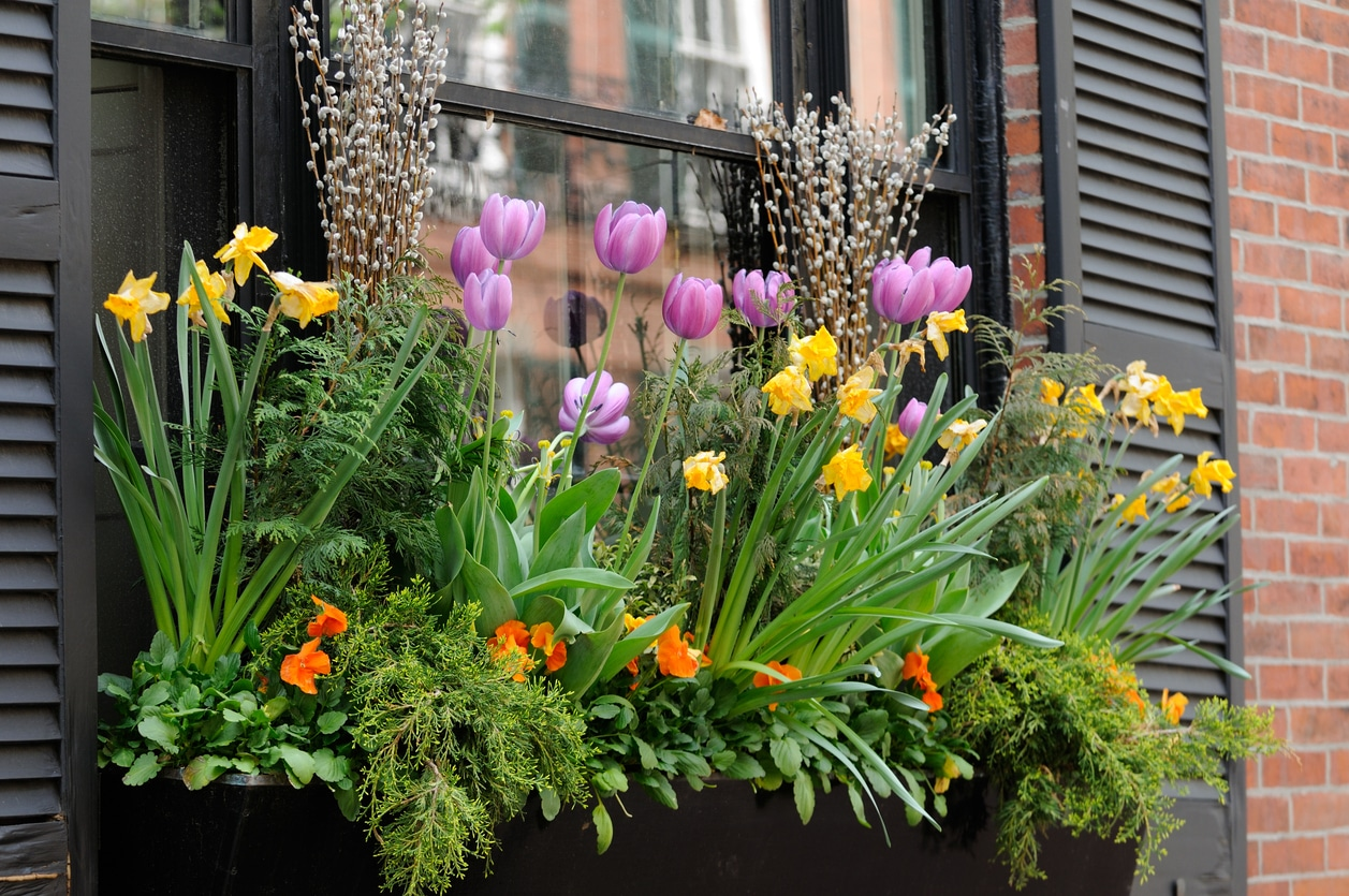 fleurs en jardinière plein soleil