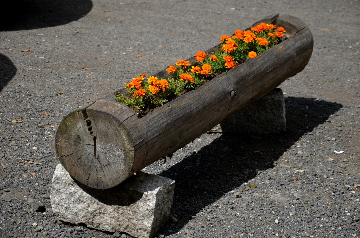 tronc d'arbre - jardinière floraison